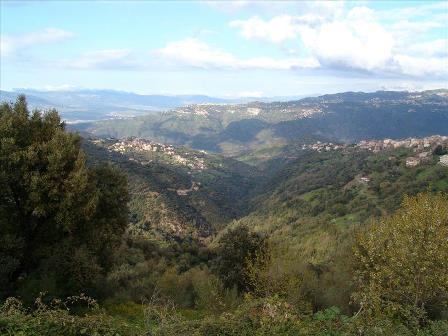 Landscape between Algiers and Tizi Ouzou