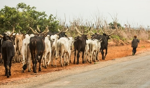 Fulani herdsmen continue to attack unprotected communities with impunity.